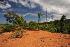 landscape103