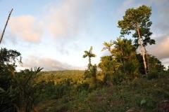 landscape110