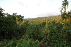 landscape111