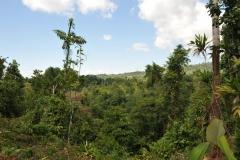 landscape115