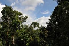 landscape35
