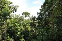 landscape36