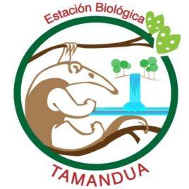 TAMANDUA